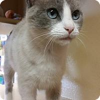Adopt A Pet :: Gloria - Grover, NC