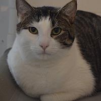 Adopt A Pet :: Maui - Geneseo, IL