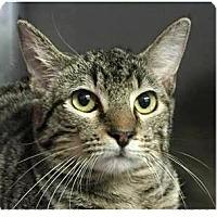 Adopt A Pet :: Adam - Springdale, AR