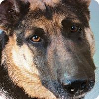 Adopt A Pet :: LIBERTY VON LINZ - Los Angeles, CA
