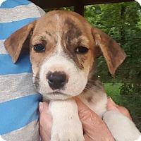 Adopt A Pet :: Splash - Glastonbury, CT