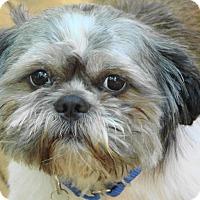 Adopt A Pet :: Luke - Chesterfield, MO