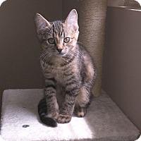 Adopt A Pet :: Izzy - Millersville, MD