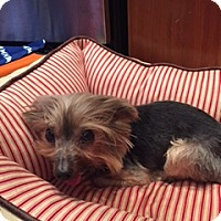 Adopt A Pet :: Jack - N. Babylon, NY