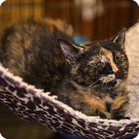 Adopt A Pet :: A..  Tori - Mooresville, NC