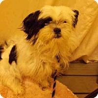 Adopt A Pet :: TEDDY - Upper Marlboro, MD