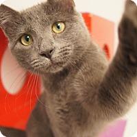 Adopt A Pet :: Dove - Colorado Springs, CO