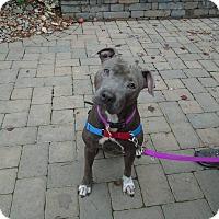 Adopt A Pet :: Aria - Salem, OR