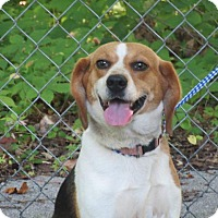 Adopt A Pet :: Fiona - Danbury, CT
