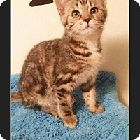 Adopt A Pet :: Majenica - Huntington, IN