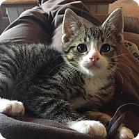 Adopt A Pet :: Bentley - Massapequa, NY