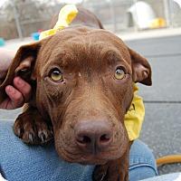Adopt A Pet :: Abbie - Wilmington, DE