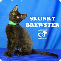 Adopt A Pet :: Skunky Brewster - Carencro, LA