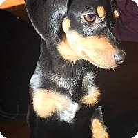 Adopt A Pet :: Decker - Decatur, GA