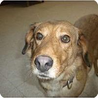 Adopt A Pet :: Marley - Douglas, MA