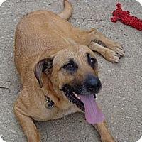Adopt A Pet :: Fonda - Frankfort, KY