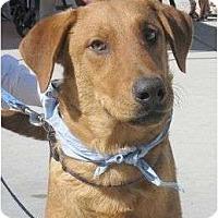 Adopt A Pet :: CHET - La Mesa, CA