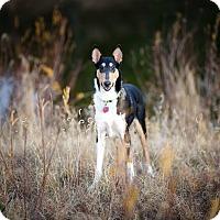 Adopt A Pet :: River - Pueblo West, CO