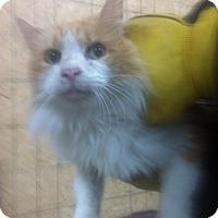 Adopt A Pet :: Dexter - Carey, OH