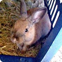 Adopt A Pet :: Candito - Williston, FL