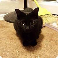 Adopt A Pet :: Genie - Putnam, CT