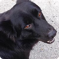 Adopt A Pet :: Ozzie - Ocean Ridge, FL