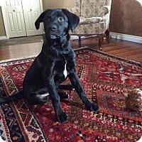 Adopt A Pet :: Tucker - Saskatoon, SK