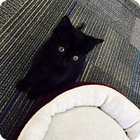 Adopt A Pet :: Lilo - Edmonton, AB