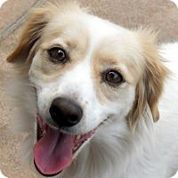 Adopt A Pet :: Tillie - Oakley, CA
