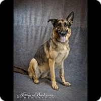 Adopt A Pet :: Hope - Houston, TX