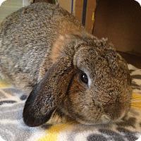 Adopt A Pet :: Sheldon - Watauga, TX
