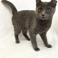 Adopt A Pet :: Eddie - Mission Viejo, CA