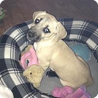 Adopt A Pet :: Skeeter - Huntsville, AL