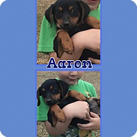 Adopt A Pet :: Aaron-pending adoption - Manchester, CT