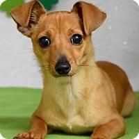 Adopt A Pet :: Aleksandr - Dublin, CA