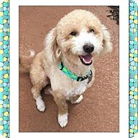 Adopt A Pet :: Marley - SE TX - Tulsa, OK