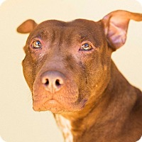 Adopt A Pet :: Pallie - Cincinnati, OH