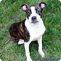 Adopt A Pet :: Raynne - Bloomington, MN