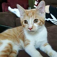 Adopt A Pet :: LIESEL - Dickson, TN