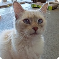Adopt A Pet :: Muffin - Grants Pass, OR