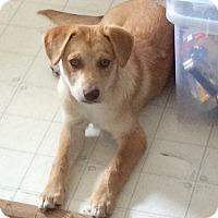 Adopt A Pet :: Crixius - Saskatoon, SK