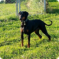 Adopt A Pet :: Helga - New Richmond, OH