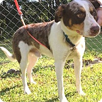 Adopt A Pet :: Hippy - Savannah, GA