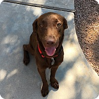 Adopt A Pet :: Gentry - Phoenix, AZ