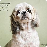 Adopt A Pet :: Louie - Chandler, AZ