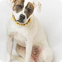 Adopt A Pet :: Mandi - Hendersonville, NC