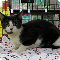 Adopt A Pet :: .Kansas - Ellicott City, MD