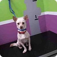 Adopt A Pet :: LOUIGY - Houston, TX