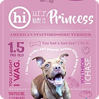 American Staffordshire Terrier Mix Dog for adoption in Jacksonville, Florida - Princess