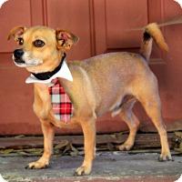 Adopt A Pet :: Peanut - Dalton, GA